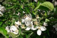 floare ne-brumata